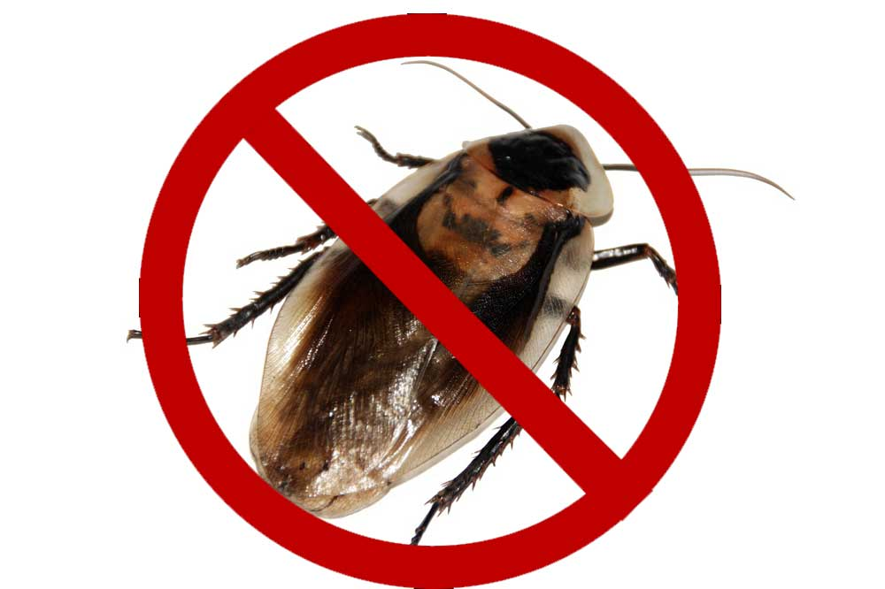 cockroach prevention tips, cockroach control tips